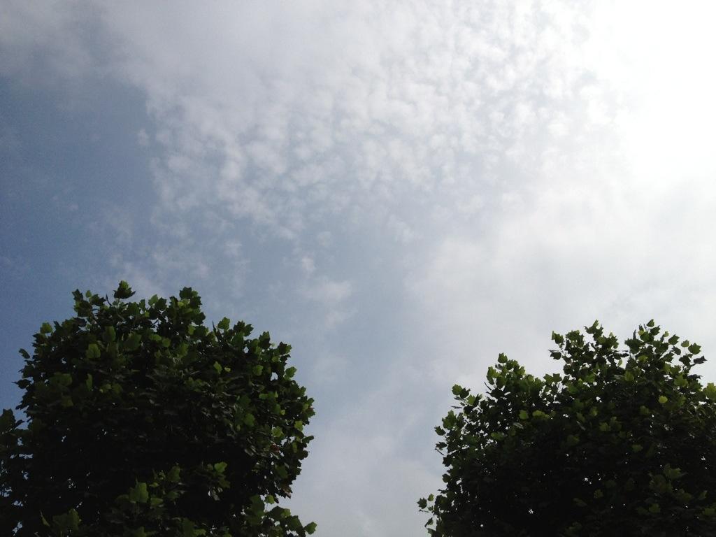 20130727-084905.jpg